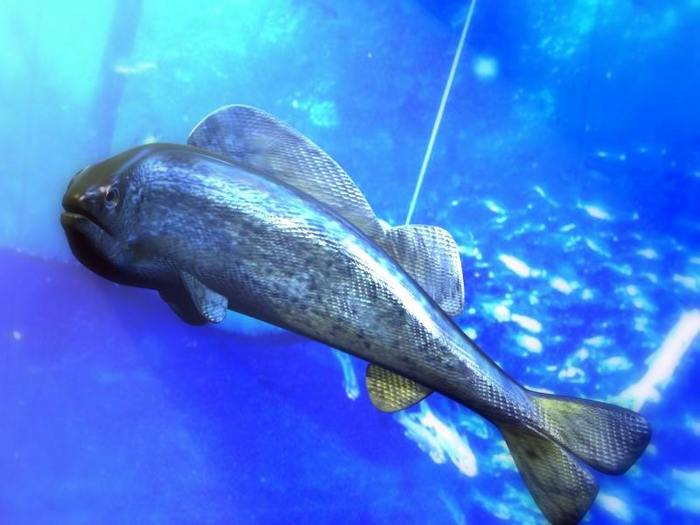 http://gallery.mudpuddle.co.nz/albums/public/aquarium1.sized.jpg
