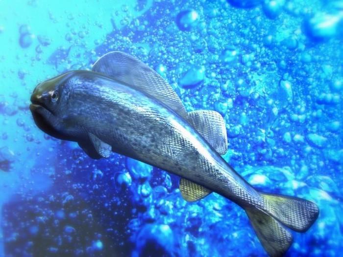 http://gallery.mudpuddle.co.nz/albums/public/aquariumbubble.sized.jpg